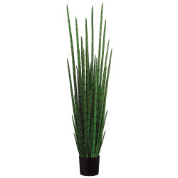 "Sanseveria Cylindrica in Plastic Pot 63"""