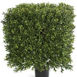 "Boxwood Topiary Square 21"" X 16"""