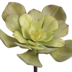 """Echeveria Pick Frosted Green 7.5"""""""