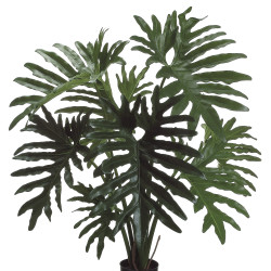 "Selloum Philodendron Plant in Plastic Pot 31"""
