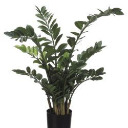 "ZZ Plant in Plastic pot 42"""