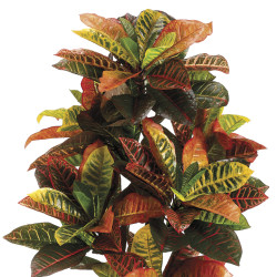 "Croton Plant In Black Plastic Pot 36"""