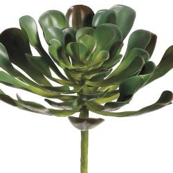 "Aeonium Plant Green 8.5"""