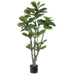 Ficus Lyrata in Plastic Pot 4'