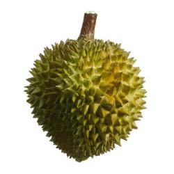 "Durian Fruit Green 7.5"""