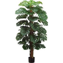 "Split Leaf Philodendron On Pole In Pot 60"""