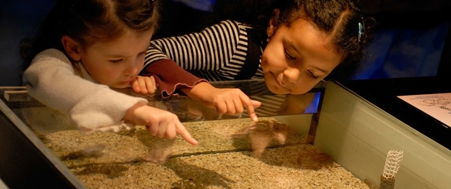 Cool Museums for Kids