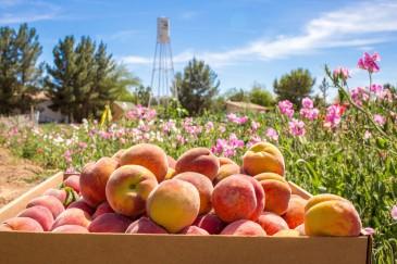 Follow the Food Trails of Arizona