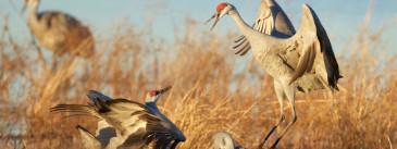 7 Arizona Spots Every Birder Should Know About