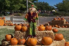 10th Annual Autumnfest
