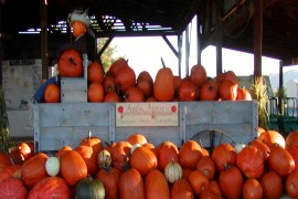 Fall Pumpkin Celebration - Sep. 30 - Oct. 1