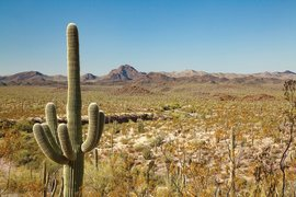 Art and Science - Ways of Knowing the Sonoran Desert