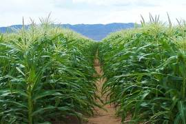 Sweet Corn Extravaganza