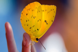 2017 Fall Butterfly Exhibit