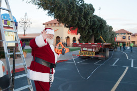 Arizona's Tallest Fresh Cut Christmas Tree Arrives