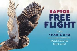 Raptor Free Flight 2018
