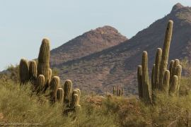 McDowell Sonoran Conservancy commemorates 75th anniversary of Royal Air Force plane crash in Scottsdale
