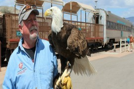 Raptors on the Rails with Liberty Wildlife - December 1