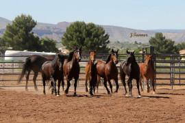 Arizona Horseman's Challenge & Expo
