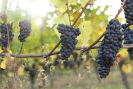 Maynards Spring Wine Tasting: New World Reds from the Northwest