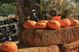 Mortimer Family Farms Pumpkin Festival & Corn Maze