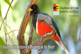8th Annual The Southeast Arizona Birding Festival
