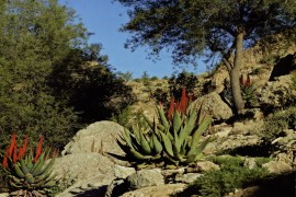 General Guided Tour of the Arboretum - Nov 24