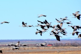 Wings Over Willcox Birding & Nature Festival