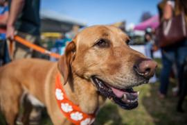5th Annual Doggie Street Festival
