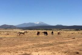 Pony Express Western Days