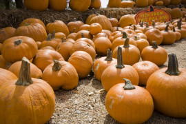25th Annual Schnepf Farms Pumpkin & Chili Party