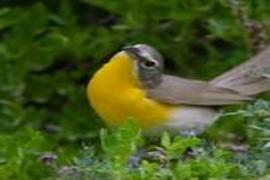 Guided Bird Walks at the Arboretum