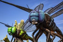 Bugs. BIG BUGS!