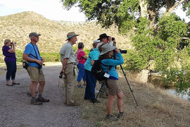 19th Annual Verde Valley Birding & Nature Festival