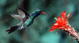 6th Annual Sedona Hummingbird Festival