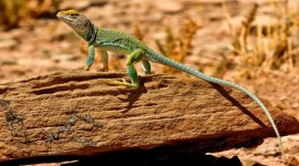 2017 Learn Your Lizards - July 29-30