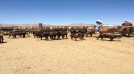 3rd Annual Willcox West Fest – Ranch Rodeo