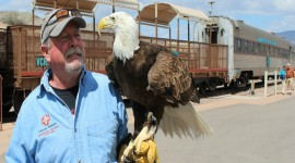 Raptors on the Rails with Liberty Wildlife - July 4