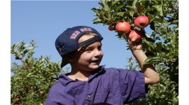 19th Annual Apple Harvest Celebration