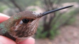 2019 Hummingbird Banding at Casa de San Pedro Bed & Breakfast