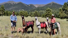 Arizona Backcountry Llamas
