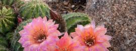 Arizona in Bloom