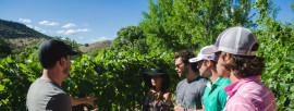 Exploring Arizona's Winery Regions