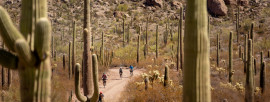 Explore Organ Pipe's Backcountry by Bike