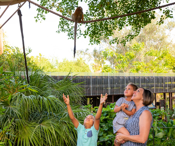 A woman holds a young girl, and watches a young boy try to reach a lemur on a rope above
