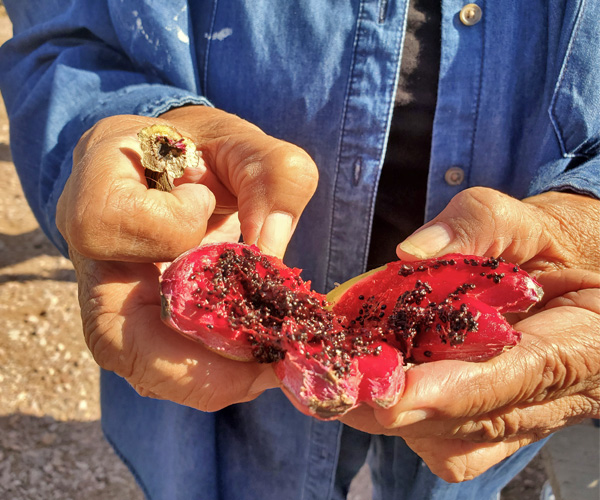 Two hands hold open a saguaro fruit, exposing the black seeds and red fruit inside
