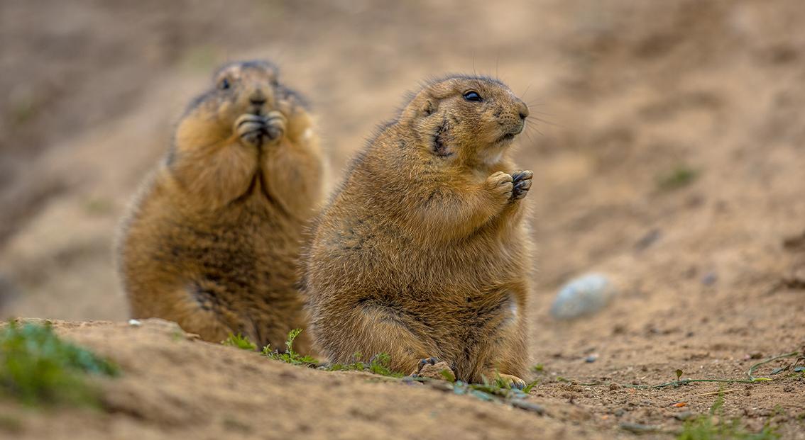 Donate_Your_Tax-Refund_To_Arizona_Wildlife_Conservation