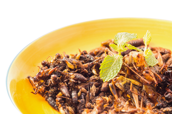 Eat Crickets for Gut Health - The Wellnest by HUM Nutrition