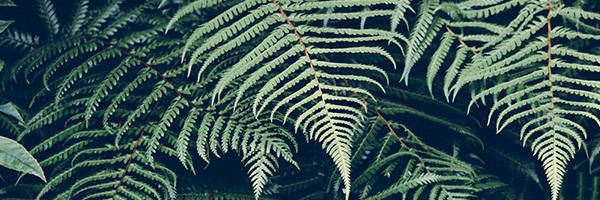 Best Vitamins for Skin include the fern Polypodium Leucotomos