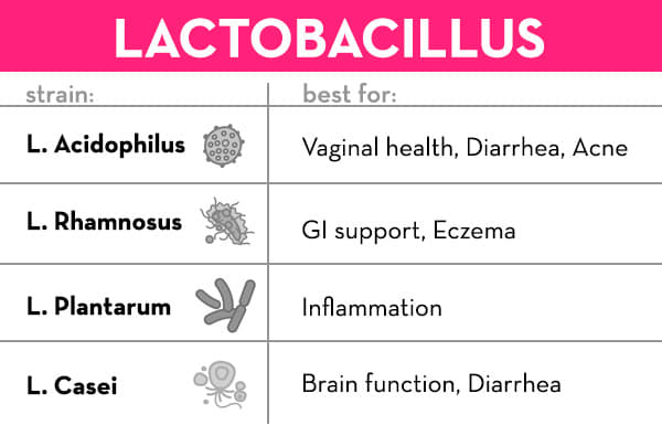 Best Probiotic - Lactobacillus